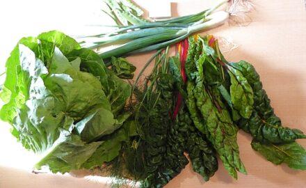 1 kräftiger Kopfsalat - 30g Zuckerschoten - 200g Mangold - Dill - 60g Lauchzwiebeln [8. Juni]
