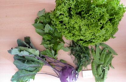 1 großer Salat nach Wahl - 1 Kohlrabi - 100g Zuckererbsen - Basilikum und Fenchelkraut [15. Juni]