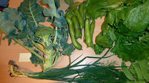 80g Zuckererbsen - 220g Dicke Bohnen - 60g Lauchzwiebeln - 1 kl. Gurke (auf dem Foto unter dem Lauch) - 1 schöner Salat - Dill - Brokkoli mit Stumpf und Stil [22. Juni]
