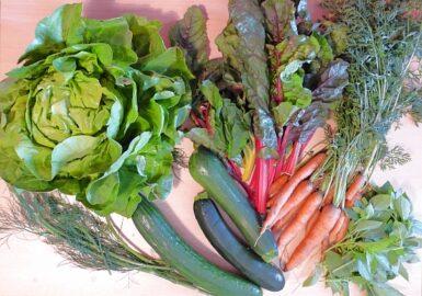 230g Mangold - 400g Möhren mit Grün - 2 Zucchini - 1 große Salatgurke - 1 großer Salat - 50g Basilikum - 50g Dill [6. Juli]