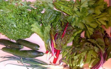 200g Rote Beete - 1 Salatgurke - 2 Zucchini - 1 Staudensellerie - 200g Frühlingzwiebeln - 150g Zuckerschoten - 1 Kopfsalat - Mangold, Basilikum und Dill nach Bedarf [20. Juli]