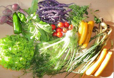 1 Kopfsalat - 1 Fenchelknolle - 30g Basilikum - 300g Frühlingszwiebeln - 250g rote Bohnen - 100g Paprika - 200g Tomaten - 600g Zucchini [3. August]