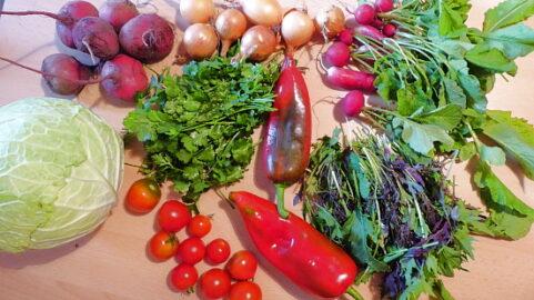 500g Rote Beete - 230g Zwiebeln - 130g Radischen mit Grün - 225g Tomaten - 2 Paprika - 1 Wirsingkohl - 75g Asia-Salat - Koriander nach Wahl [12. Oktober]