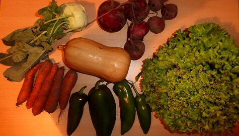 1 kg Rote Beete - 600g Paprika - 500g Möhren - 1 Kohlrabi - 1 Butternutkürbis - 1 Kopfsalat [26. Oktober]