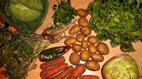 600g Karotten - 1kg Kartoffeln - 200g Petersilienwurzel - 1 Kohlrabi - 1 Wirsing - 150g Paprika (immer noch Freiland!) - 1 Kopfsalat (Freiland!) - Koriander nach Wahl [2. November]