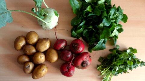 1 Kohlrabi - 400g Rote Beete - 500g Kartoffeln - 100g Feldsalat - 20g Koreander [16. November]