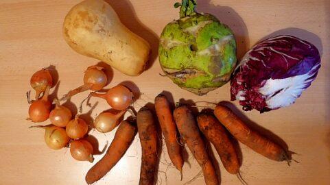 1 Butternut-Kürbis - 1 Radiccio Salat - 1 Superschmelz Kohlrabi - 250g Zwiebeln - 550g Karotten [14. Dezember]