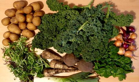 1 Porree - 600g Grünkohl - 1,2kg Kartoffeln - 350g Pastinaken - 500g Rote Beete - 250g Zwiebelmix - 40g Asia-Salat - 80g Feldsalat [21. Dezember]