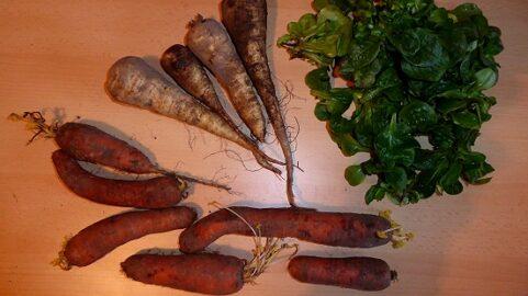 1200g Karotten - 120g Feldsalat - 600g Pastinaken 8. Februar]