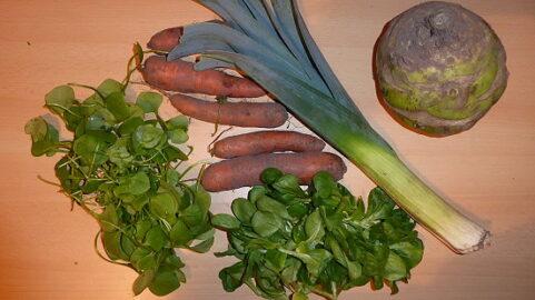 300g Postelein - 300g Feldsalat - 1 Stange Porree - 1 Superschmelz Kohlrabi - 600g Karotten [22. Februar]